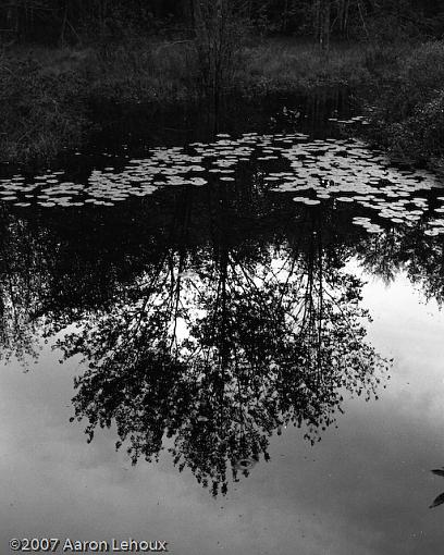 More fun with the Canonet-lilypad-reflection.jpg