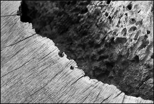 UK Members ... Met-rotten-tree-trunk-jpg.jpg