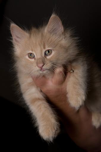 Got a pet? Post a pic!-vv9w7305.jpg