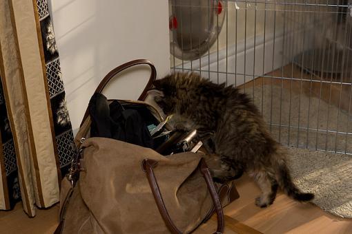 Got a pet? Post a pic!-vv9w7460.jpg