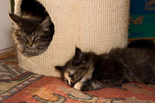 Got a pet? Post a pic!-vv9w7470.jpg