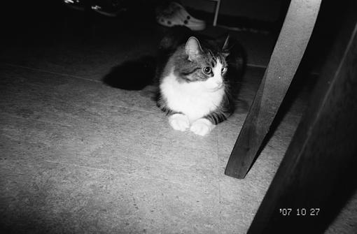 1 8-year old+1 Oly P&S+1 roll TMAX 100=...-sky-4.jpg
