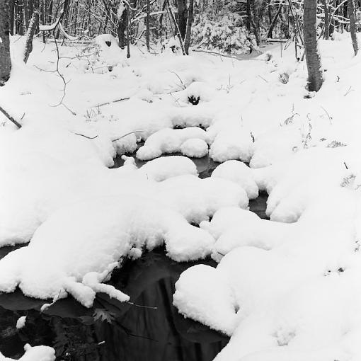 Walking in a Winter wonderland :)-12032007-2.jpg