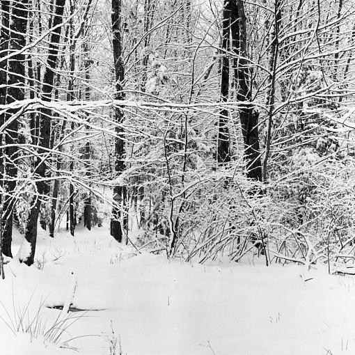 Walking in a Winter wonderland :)-12032007-12-5.jpg