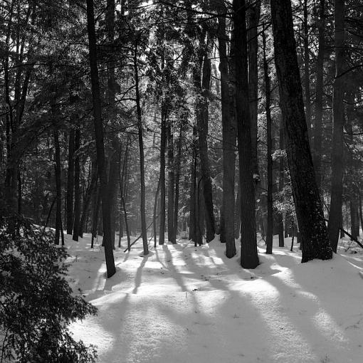 A Winter Walk In The Woods-12282007-4.jpg