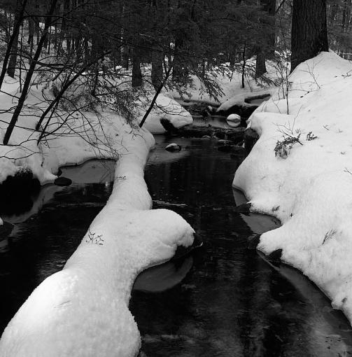 A Winter Walk In The Woods-12282007-13.jpg