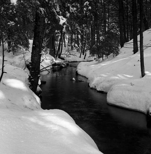 A Winter Walk In The Woods-12282007-2.jpg