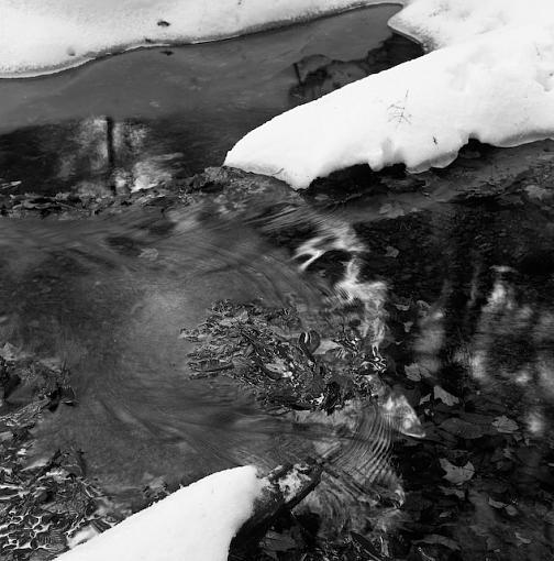 A Winter Walk In The Woods-12282007-9.jpg