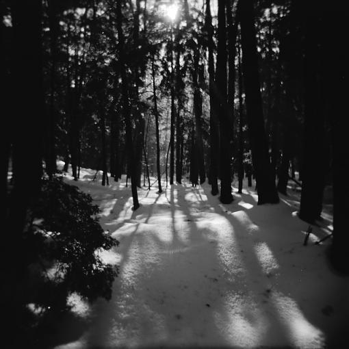 A Winter Walk In The Woods-12292007-9.jpg