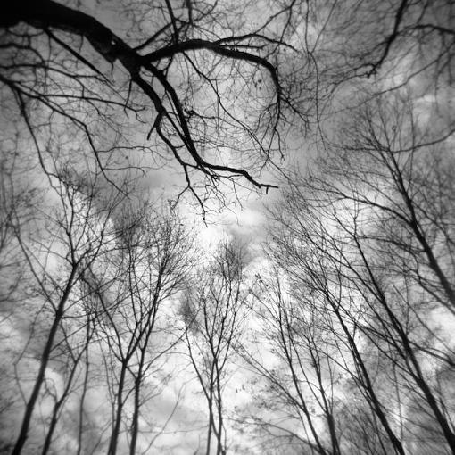A Winter Walk In The Woods-12292007-4.jpg