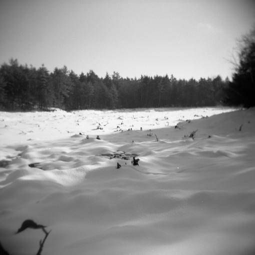 A Winter Walk In The Woods-12292007-8.jpg