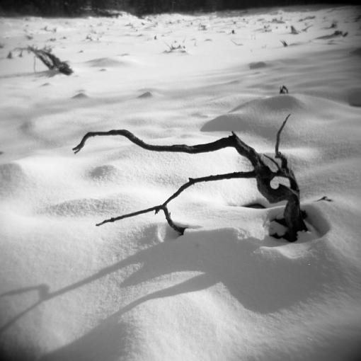 A Winter Walk In The Woods-12292007-5.jpg