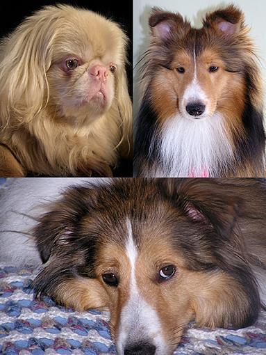 Got a pet? Post a pic!-dogs.jpg