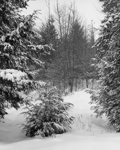 W/NW - Winterscapes-01272008-1.jpg