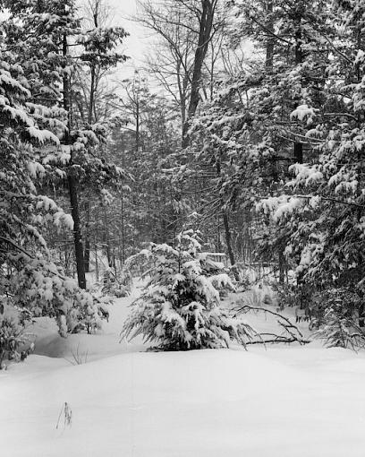 W/NW - Winterscapes-01272008-3.jpg