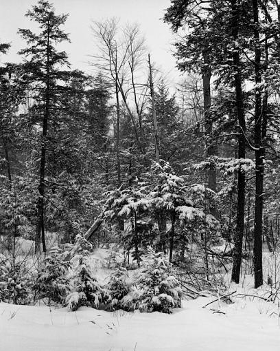 W/NW - Winterscapes-01272008-6.jpg