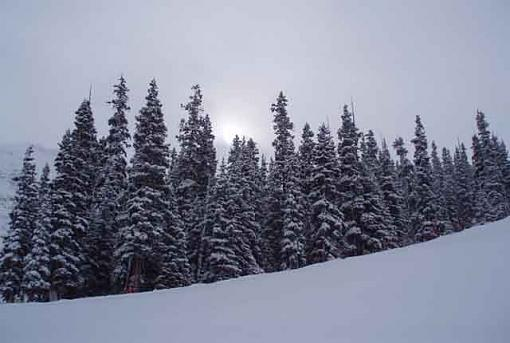 W/NW - Winterscapes-curve.jpg