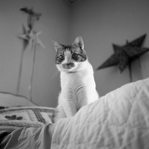 Got a pet? Post a pic!-02022008-5.jpg
