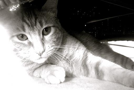 Got a pet? Post a pic!-oliver1.jpg
