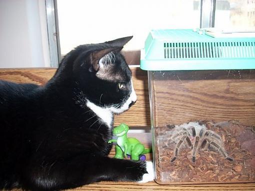 Got a pet? Post a pic!-catandrosie.jpg
