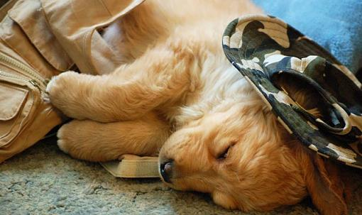 Got a pet? Post a pic!-dsc_2078..jpg