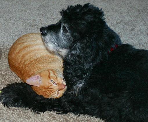 Got a pet? Post a pic!-zeke-lucky-march-08r.jpg
