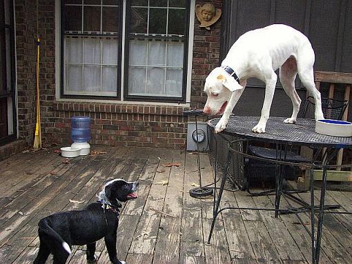 Got a pet? Post a pic!-nero-remmy.jpg