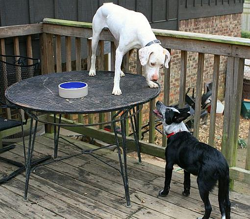 Got a pet? Post a pic!-nero-remmy-march-table.jpg