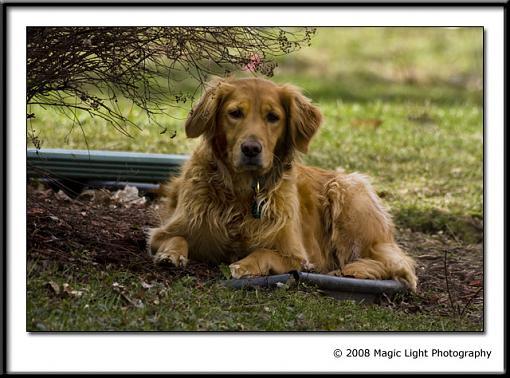 Got a pet? Post a pic!-img_2115.jpg