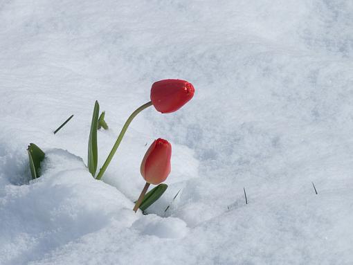 more easter flowers-img_0389.jpg