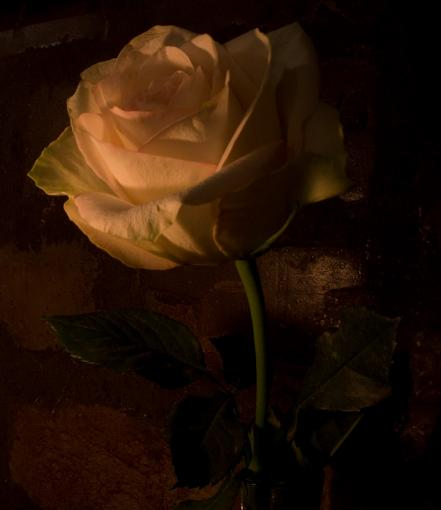 by candlelight-img_0450.jpg