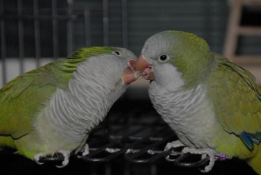 love is in the air-_b0c4002-medium-.jpg