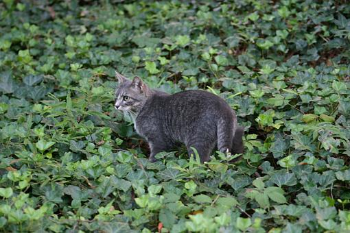 For all the cat lovers out there-huntercat.jpg
