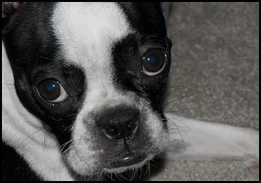 Got a pet? Post a pic!-beet1web.jpg