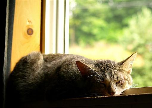 Cat nap-window-cat-small-.jpg
