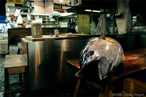 Japan!  My journey home.-fma-3-1594-.jpg