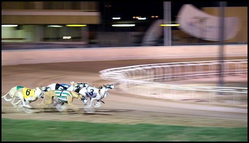 First Time at the Track-dogs2web.jpg