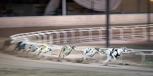 First Time at the Track-dogs3web.jpg