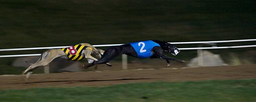 First Time at the Track-dogs5web.jpg