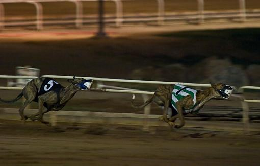 First Time at the Track-dogs6web.jpg