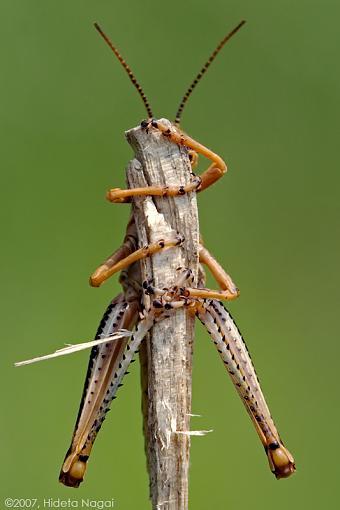 Got any funny or weird pics?-fun-hopper-hug.jpg