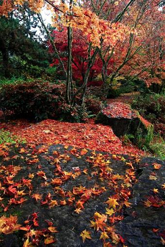 The Final Fall Shoot from Landscape to Microscape-19-medium-.jpg