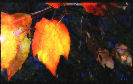 A couple of leaves-apuase_awe.jpg