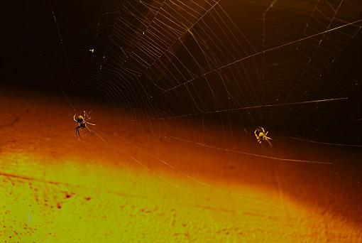 Night Time Work-dueling_spiders97.jpg