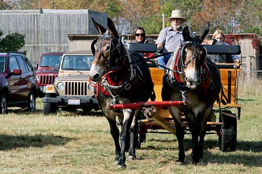 Transportation Thread-transportation.jpg