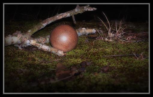 Still Life: twig, moss, ball of dirt...-dorodango4web.jpg