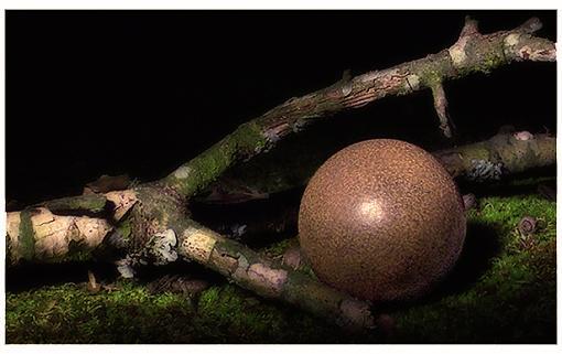 Still Life: twig, moss, ball of dirt...-dorodango1.jpg