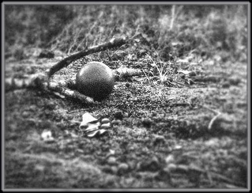 Still Life: twig, moss, ball of dirt...-dorodango2.jpg