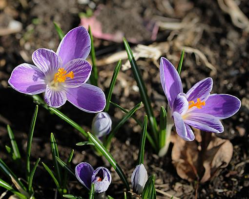 Has Spring Sprung????-dsc_5869-2-800.jpg