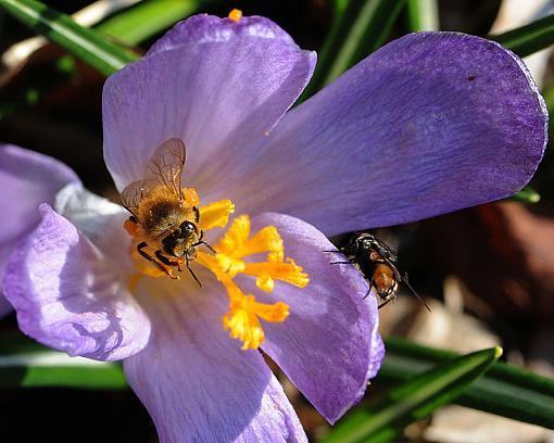 Has Spring Sprung????-dsc_6037-4-800.jpg